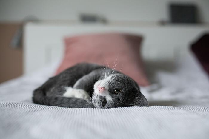 besser schlafen Tipps Haustiere im Bett