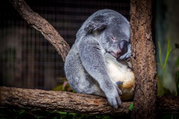 beste Schlafposition