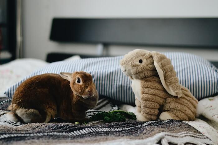 schlafstörungen wechseljahre getrennte betten